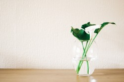 عکس زمینه گیاه سبز در گلدان شیشه ای