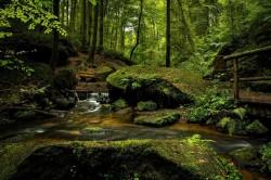 عکس زمینه آبشار و رودخانه در جنگل