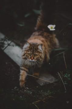 عکس زمینه گربه بامزه روی چمن سبز