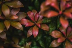 عکس زمینه گلبرگ سبز و بنفش