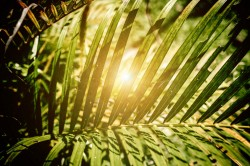 عکس زمینه برگ و نور