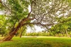 عکس زمینه درخت بلند و تنومند بهاری