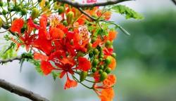 عکس زمینه گل نارنجی و سبز