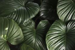 عکس زمینه برگ سبز با طراوت