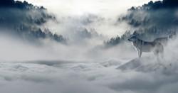عکس زمینه گرگ در برف و کولاک