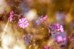 عکس زمینه گل های صورتی زیبا
