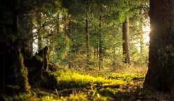 عکس زمینه جنگل سبز آفتابی