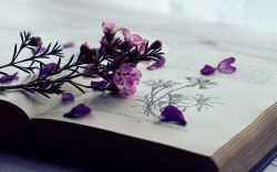 عکس زمینه گل بنفش لای کتاب
