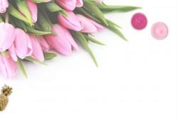 عکس زمینه گل لاله صورتی با زمینه سفید