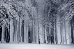 عکس زمینه جنگل برفی