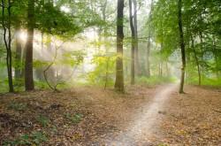 عکس زمینه مسیر خاکستری احاطه شده توسط درختان سبز