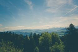 عکس زمینه درختان سبز و آبی آسمان
