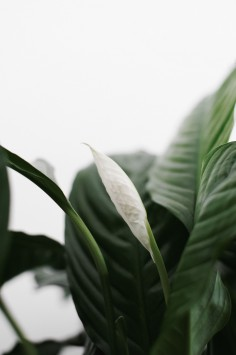 عکس زمینه برگ سبز گیاه