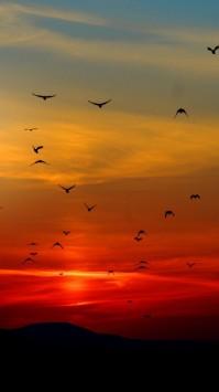 عکس زمینه پرواز پرندگان فراز آسمان نارنجی غروب