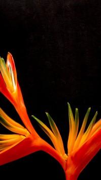 عکس زمینه گلبرگ سرخ بهشت