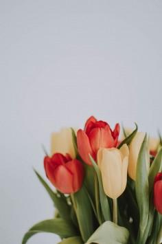 عکس زمینه گل لاله