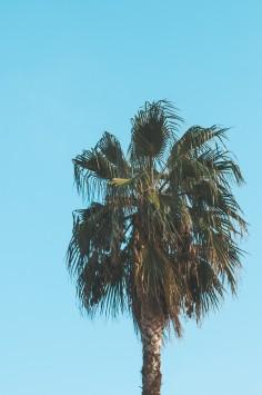 عکس زمینه درخت نخل سبز