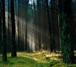 عکس زمینه جنگل با نور خورشید