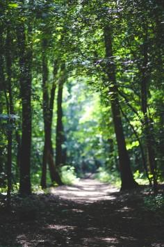 عکس زمینه مسیر در میان درختان سبز