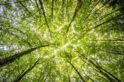 عکس زمینه نمای از پایین درختان سبز
