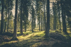 عکس زمینه چمن سبز در جنگل و درختان بلند
