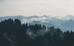 عکس زمینه درختان کاج در قله کوه
