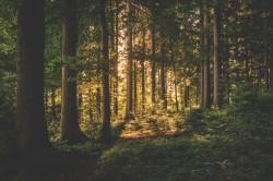 عکس زمینه روشنایی در جنگل تاریک