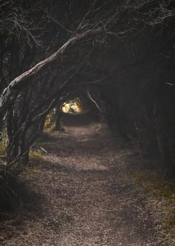 عکس زمینه مسیر درخت