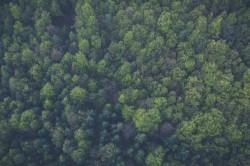 عکس زمینه درختان سبز از بالا