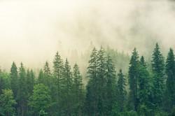 عکس زمینه جنگل پوشیده شده در مه سفید