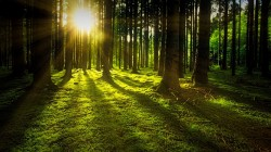 عکس زمینه غروب آفتاب در جنگل
