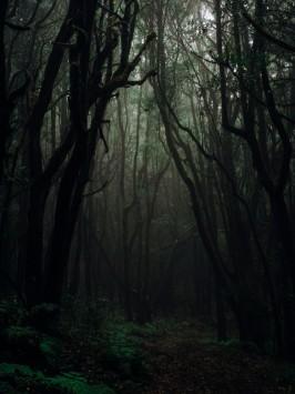 عکس زمینه جنگل ترسناک و تاریک