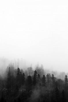 عکس زمینه درختان مه آلود