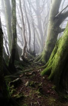 عکس زمینه درختان بلند تنومند