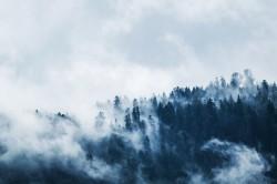 عکس زمینه درختان کاج سبز در مه سفید