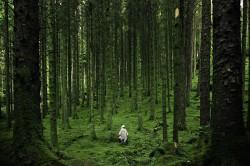 عکس زمینه راه رفتن بین درختان سبز جنگل