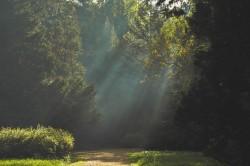 عکس زمینه تابش نور بین درختان سبز
