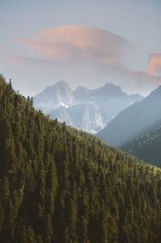 عکس زمینه درختان کاج در شیب کوه