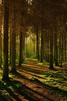 عکس زمینه جنگل خالی