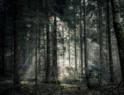عکس زمینه درخت سبز جنگل تاریک