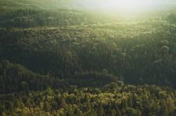 عکس زمینه جنگل پر از درختان سبز