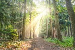 عکس زمینه مسیر بین برگ درختان به همراه تابش نور شیدید
