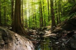 عکس زمینه عکاسی از جنگل در روز