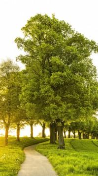 عکس زمینه مسیر میان درختان سبز هنگام صبح