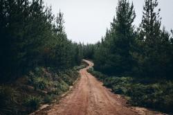 عکس زمینه جاده خاکی در میان درختان جنگلی