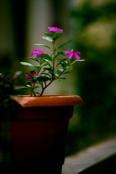 عکس زمینه گلدون و گل بنفش