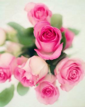 عکس زمینه دسته گل های رز صورتی