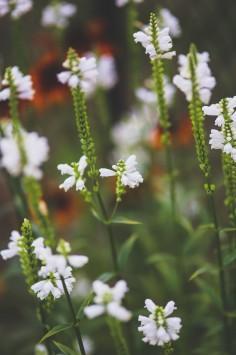 عکس زمینه گل های کوچک سفید