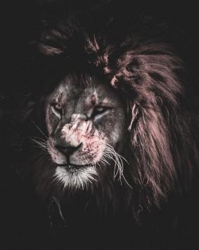 عکس زمینه نقاشی شیر
