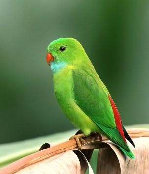 عکس زمینه پرنده سبز